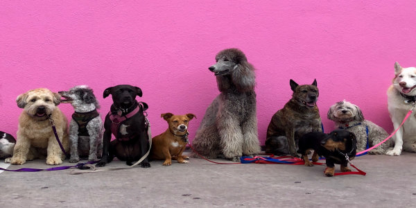 puppies_on_pink