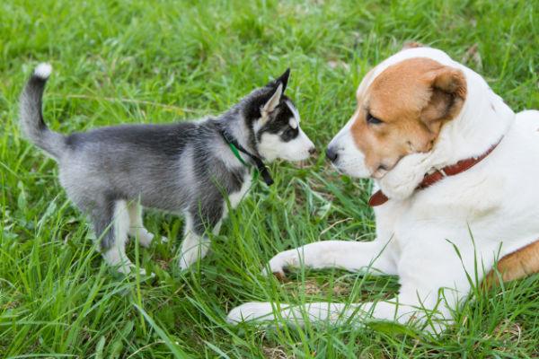 brave_puppy