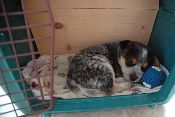 sleeping_puppy_crate