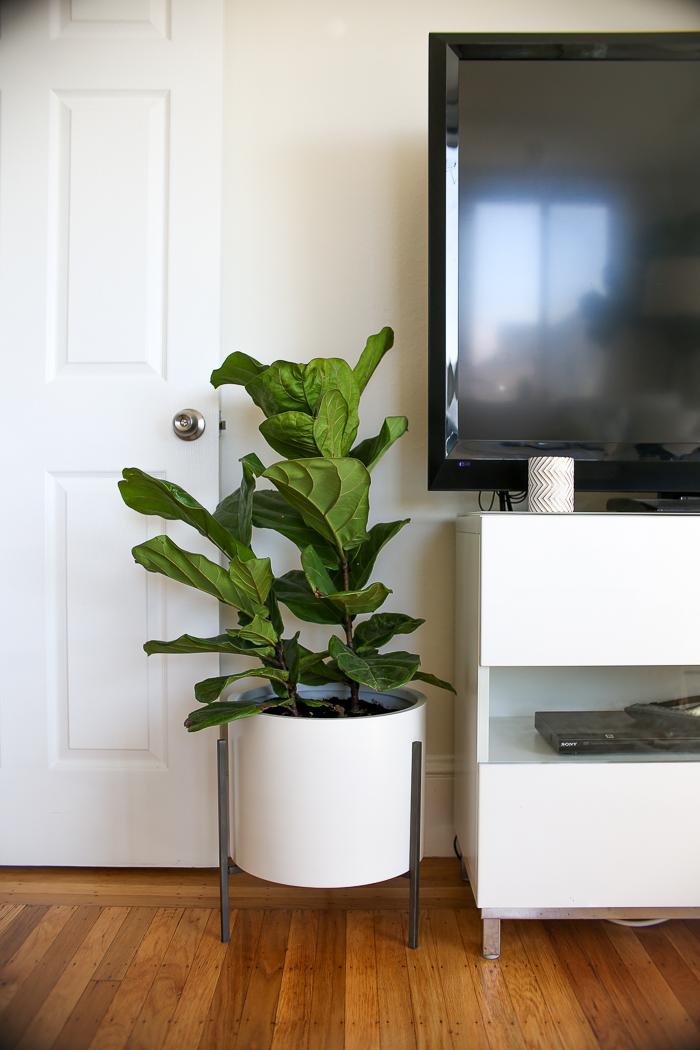 white planter on black stand