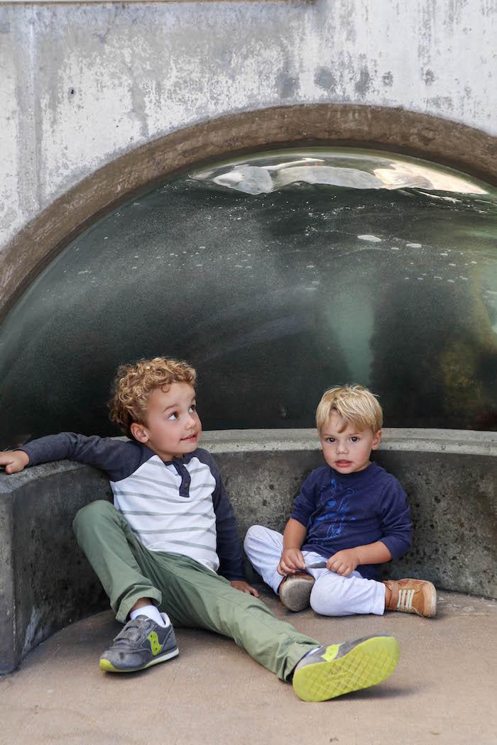 california aquarium