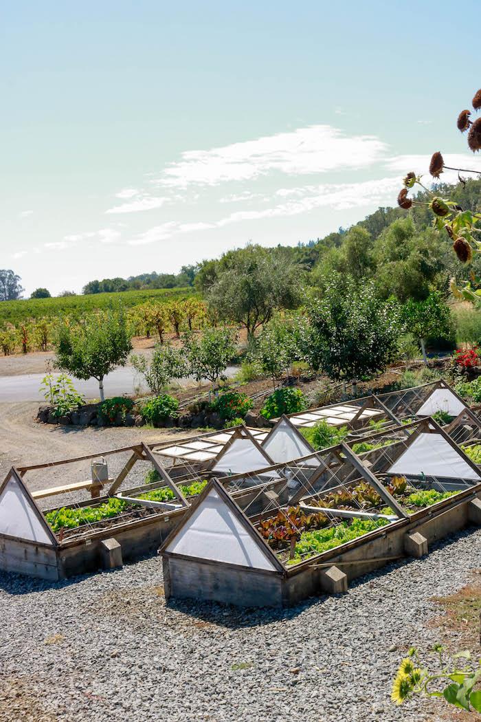 california herb garden