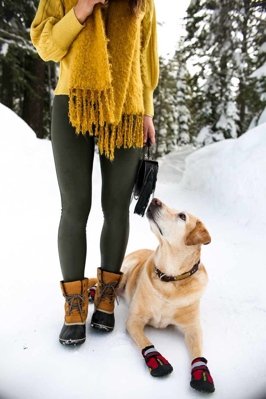 doggy snow boots