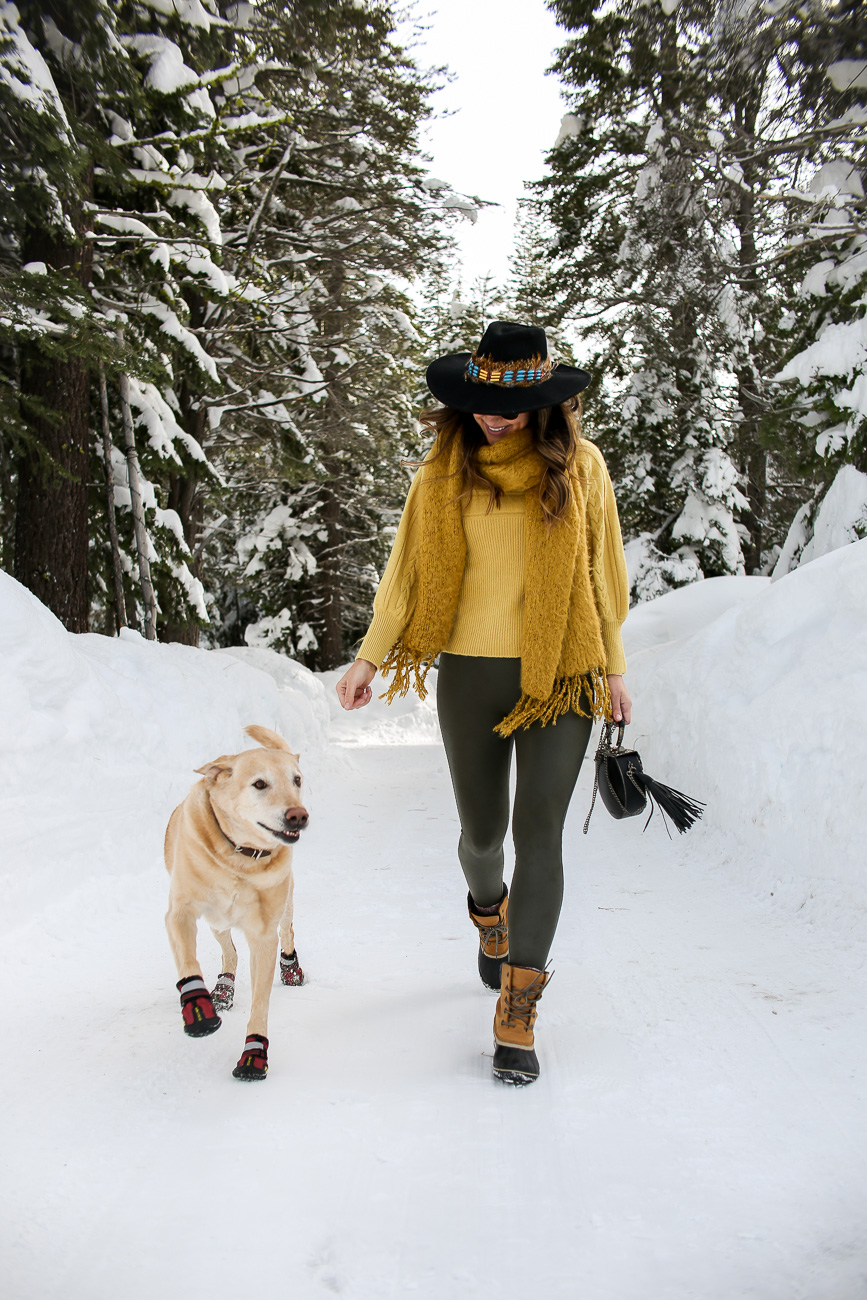 yellow lab in boots