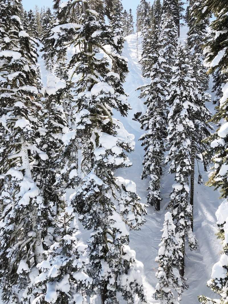tahoe snowy trees