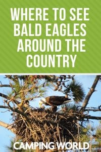 Where to see bald eagles around the country
