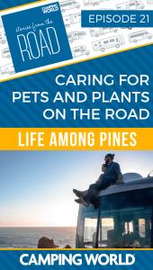 Life among pines