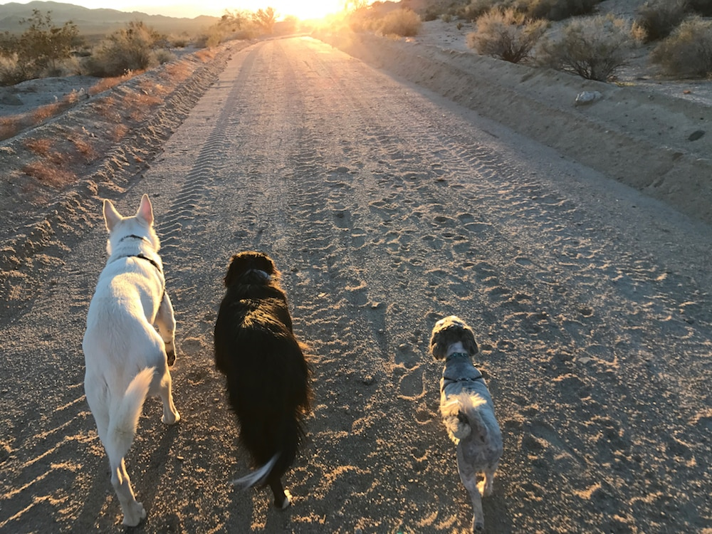 RVing with Dogs—Luna, Archie, and Maxwell