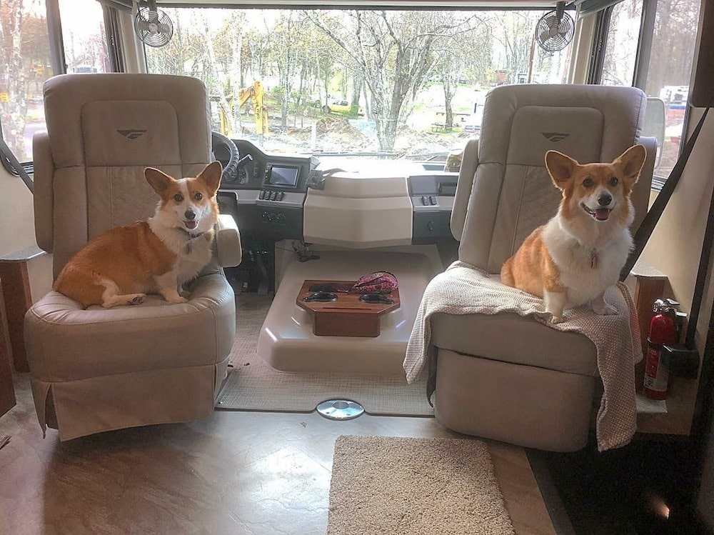 RVing with Dogs - Daphne and Willow