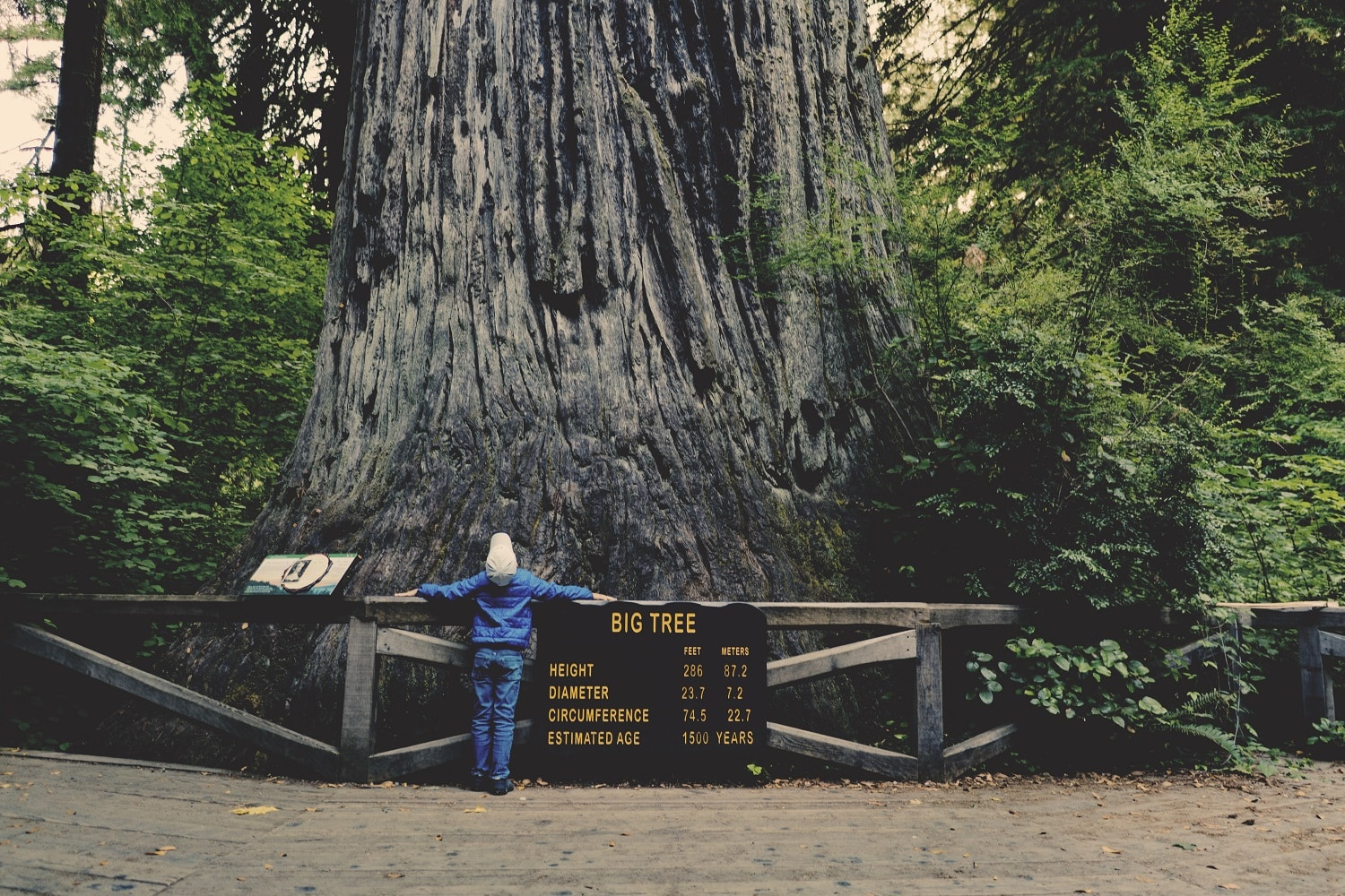 Boy standing next to and hugging a large tree.