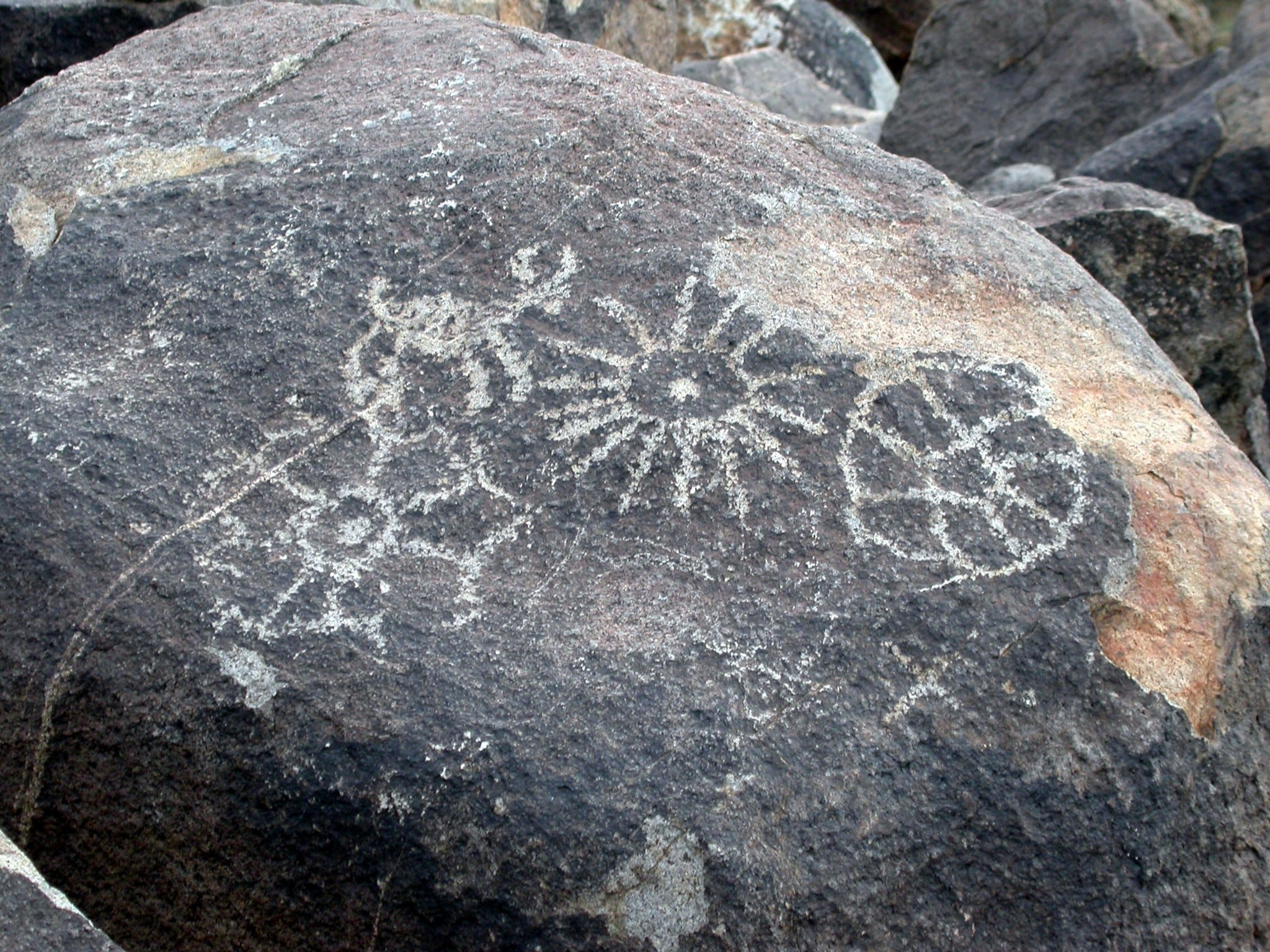 Signal Hill Petroglyph Area Sagauro National Park