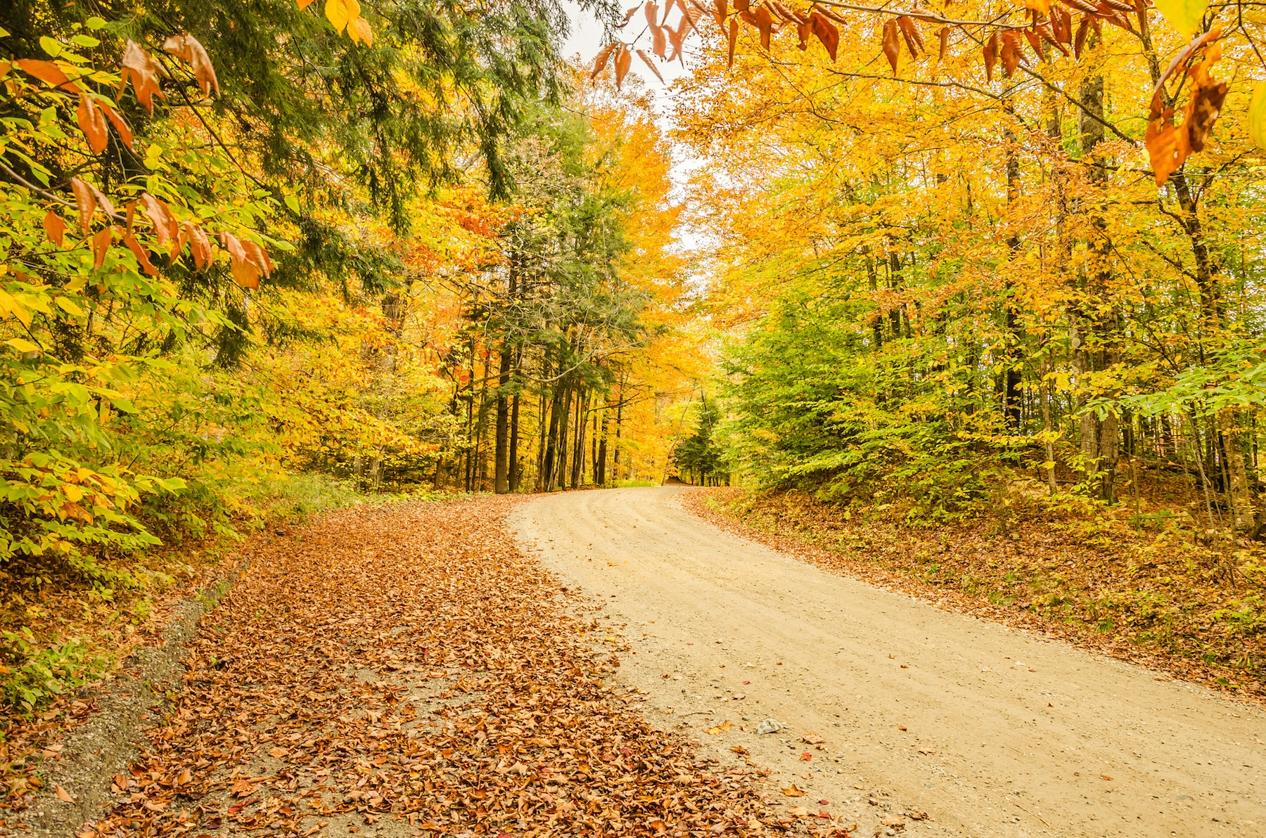 A dirt road lined with colourful trees in Vermont.