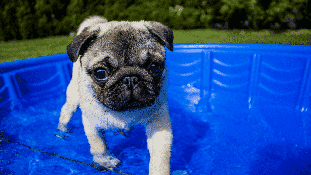 Help your pets beat the heat this summer by staying aware of the temperature, providing plenty of water and shade.