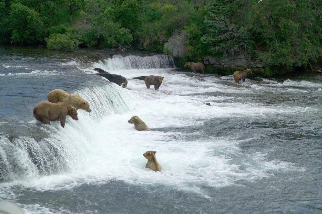 Photo Tripping America - Katmai National Park - Camping World