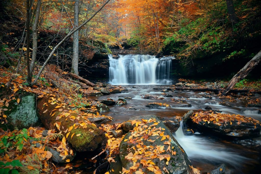 Autumn waterfalls in park with colorful foliage. at Ricketts Glen State Park
