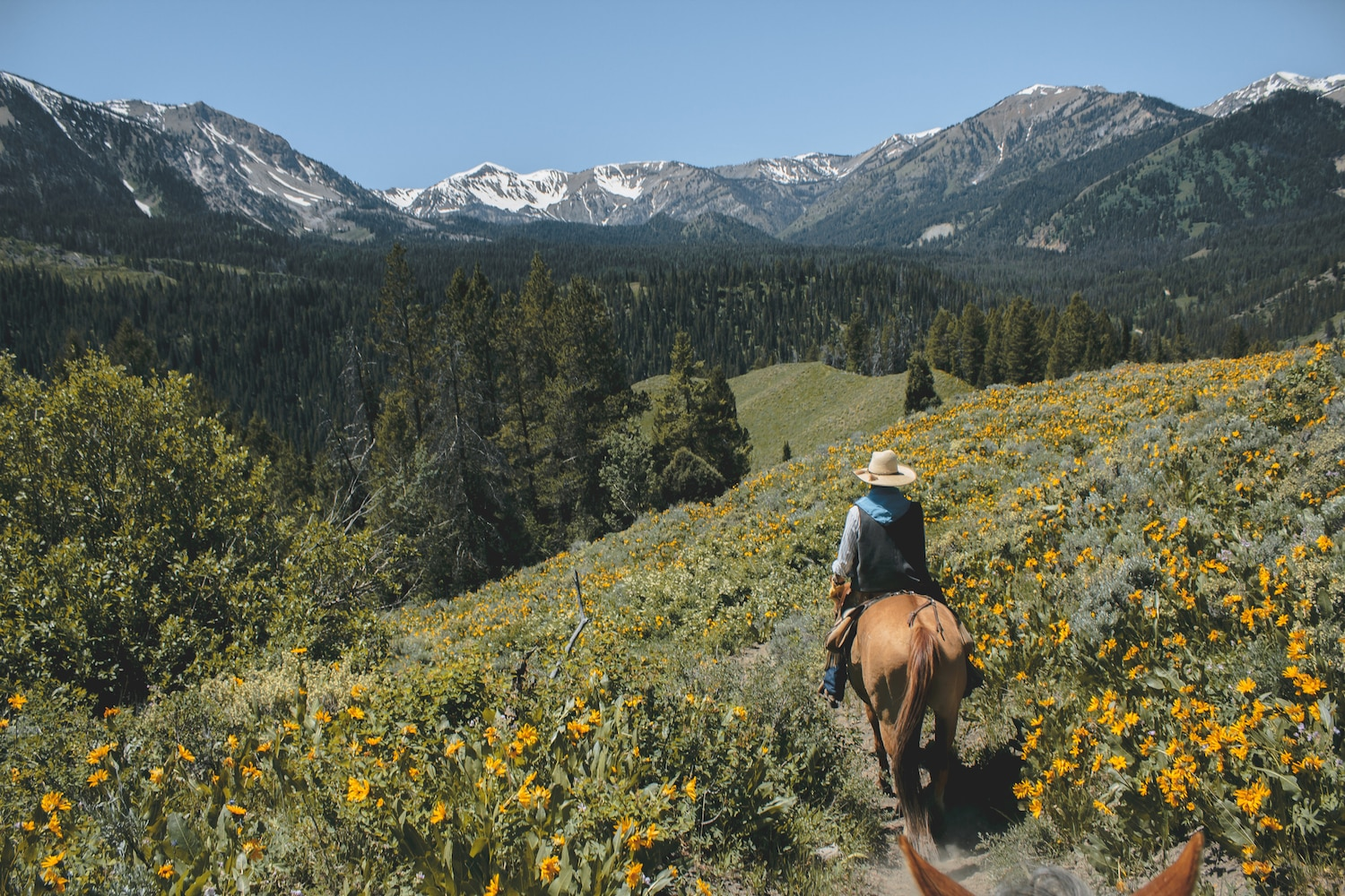 Horseback riding through the wildflowers in the Grand Teton Moutain range.