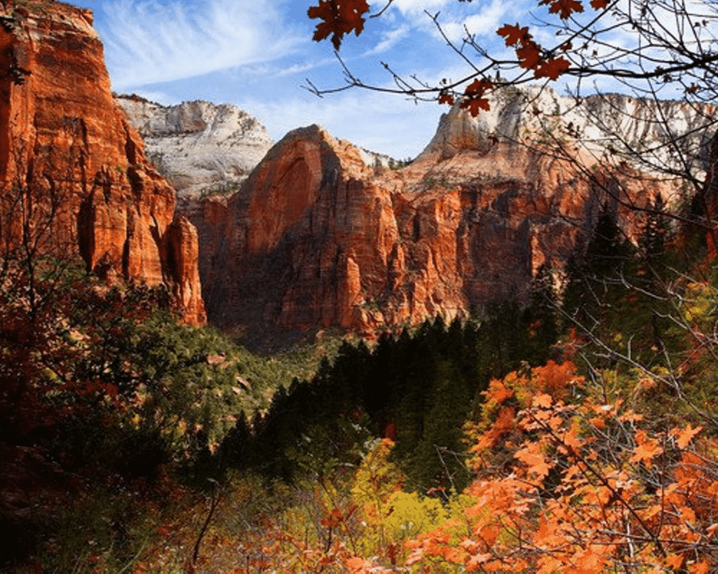 A scenic view of fall colors at Zion National Park.