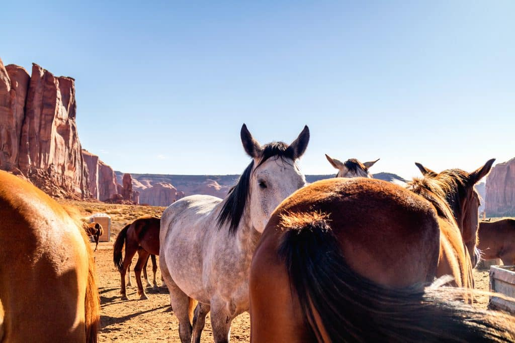 Horses in Pen in Monument Valley Navajo Tribal Park, Camel Butte Rock in Background - Wild horses in the united states