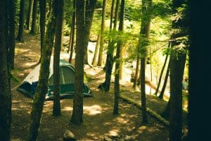trees and a tent while camping