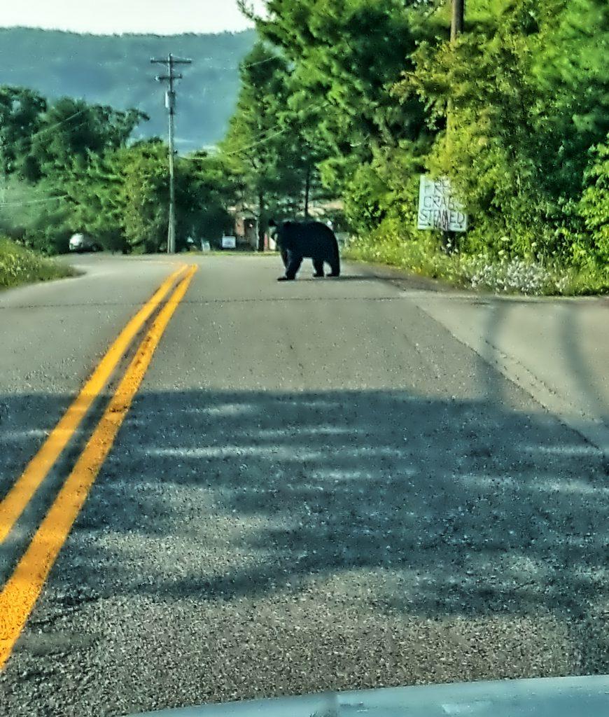 Deep Creek Lake-The Summer of the Black Bear