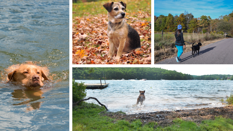 Dog Friendly Deep Creek Lake