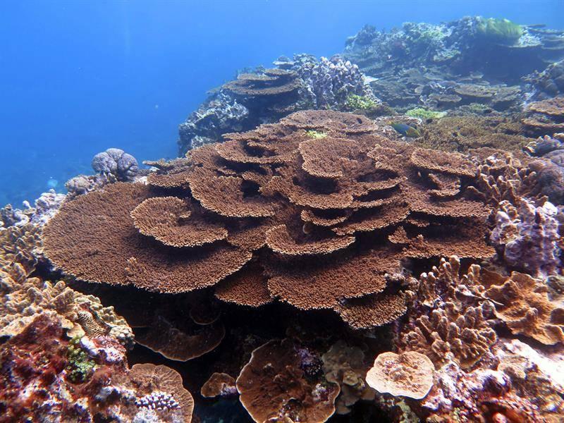 Gran Barrera de Coral Archivo