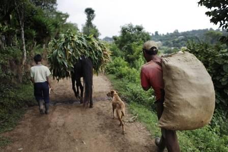 La Marcada Pobreza del Agricultor Dominicano