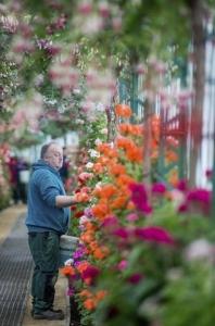 Un jardinero trabaja en los invernaderos reales de Laeken en Bruselas. EFE