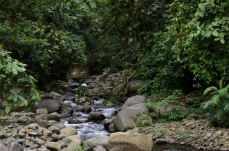 Reserva Biológica. Foto Laura Rodríguez Rodríguez