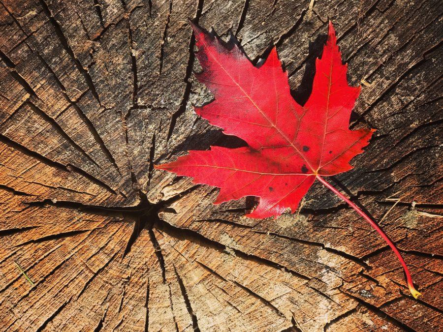 加拿大央行行长强调与比特币,天秤座有关的风险 接口新闻 第1张