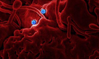 Binance donates $1.5m USD to coronavirus victims