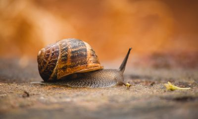Bitcoin: Are the snail-like developments putting top coin's position at risk?