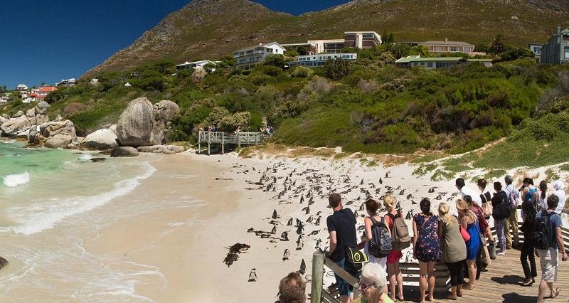 Visita à Boulders Beach na Cidade do Cabo