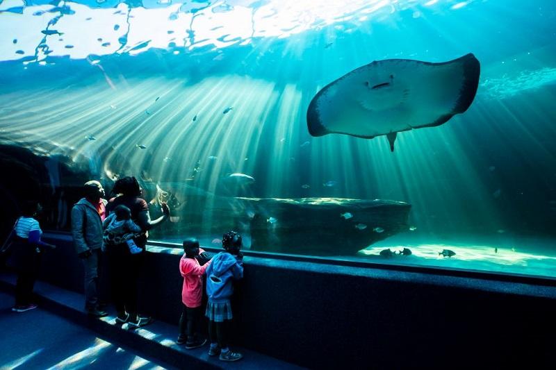 Turistas visitando o Two Oceans Aquarium na Cidade do Cabo