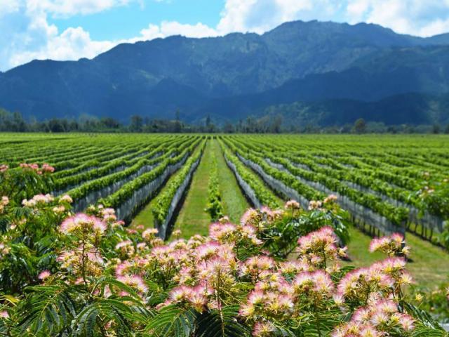 Vinícolas de Stellenbosch nas proximidades da Cidade do Cabo