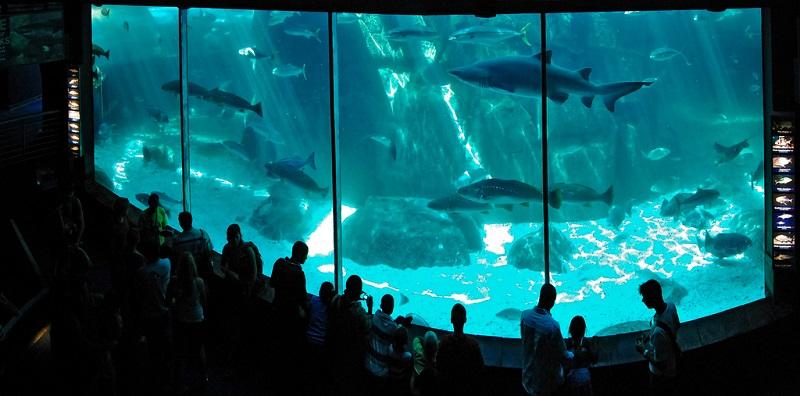 Visita ao Two Oceans Aquarium na Cidade do Cabo