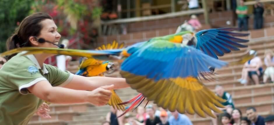 Show de aves no Jungle Park in Tenerife