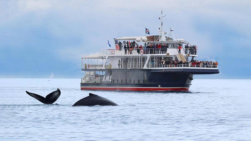 Embarcação de observação de baleias em Quebec