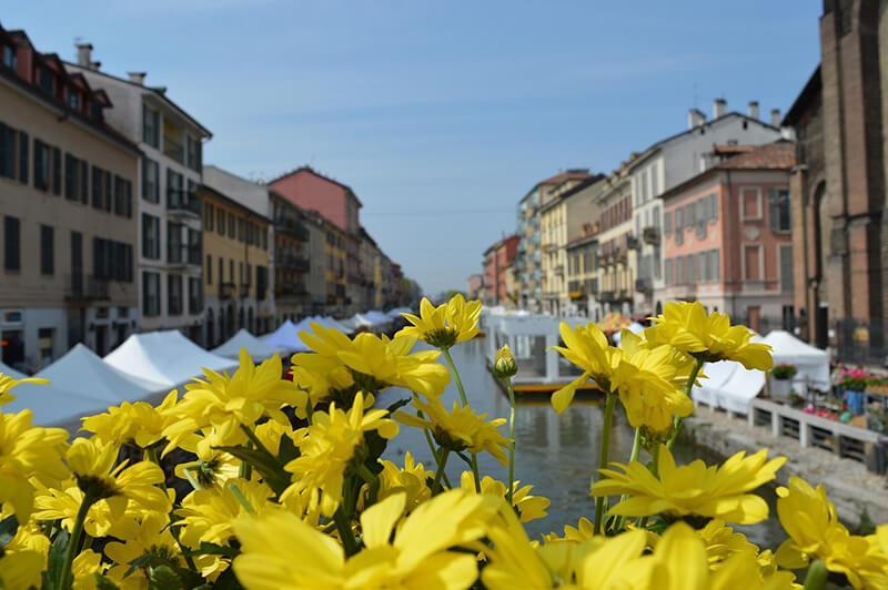 Flores da Primavera em Milão