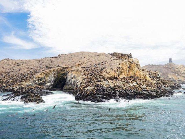 Ilhas Palomino em Lima