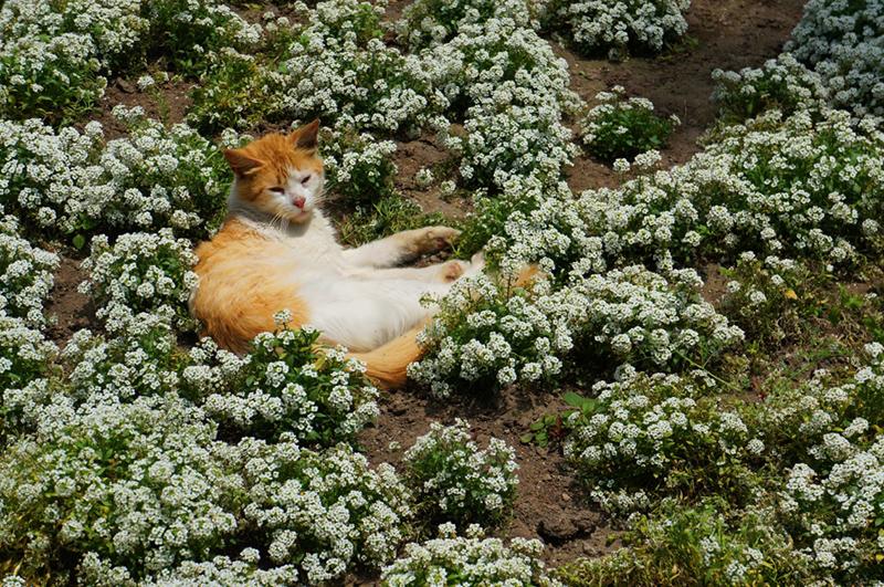 Gato do Parque Kennedy em Lima