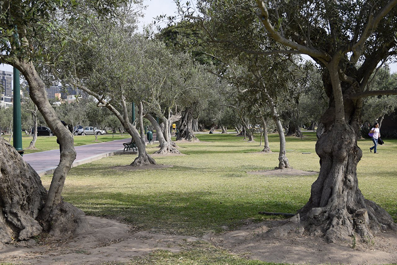 Verde do Parque el Olivar em Lima