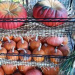 GP Pumpkin Rack