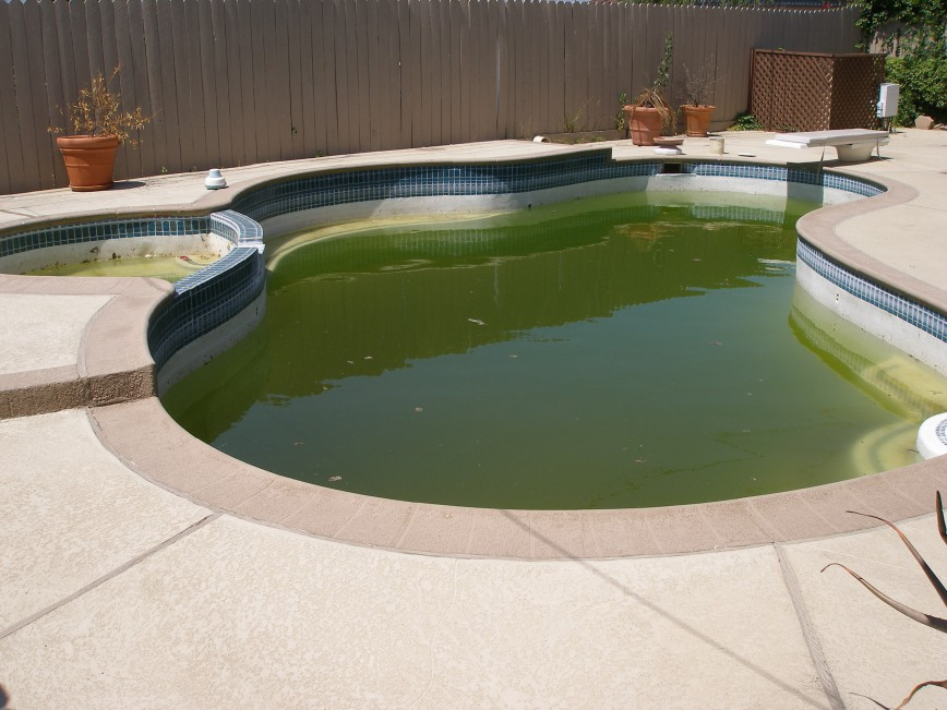 Dirty Green Pool