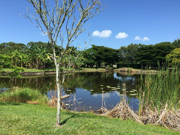 Palma Sola Botanical Park Is a Great Anna Maria Island Venue