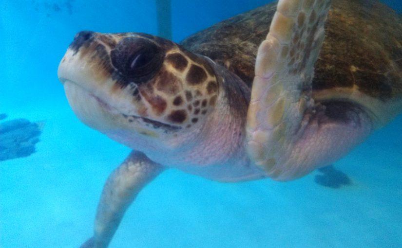 Mote Marine Laboratory Aquarium in Sarasota, FL