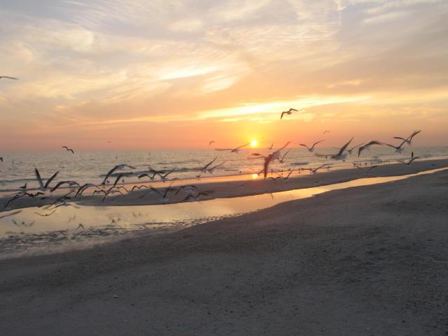 Birds Nesting Anna Maria Island – Spring is Here!