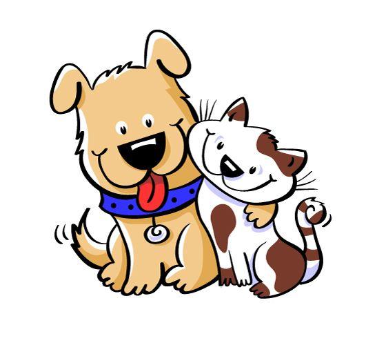 AMI Sun Pet Adoption of The Week