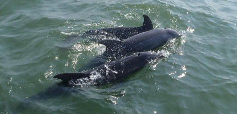 Respect Dolphins Anna Maria Island