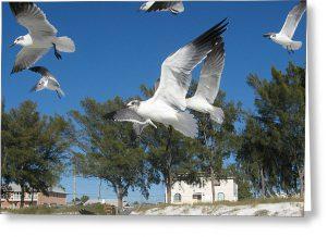 scavenger hunt seagulls